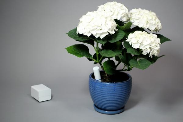 Plant Link Monitors Your Plant with Smartphone and Computer