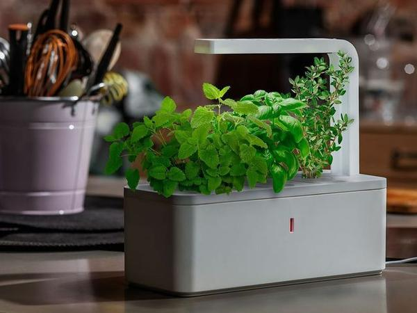 Smart Herb Garden for Your In-Door Green Project
