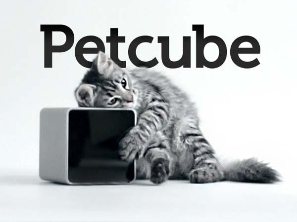 Petcube Keeps Your Pet from being Lonely