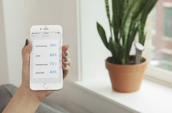 Sprout Smart Plant Monitor