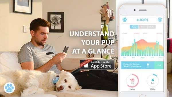 Lucky Tag is a Smart Tracking Device for Dogs