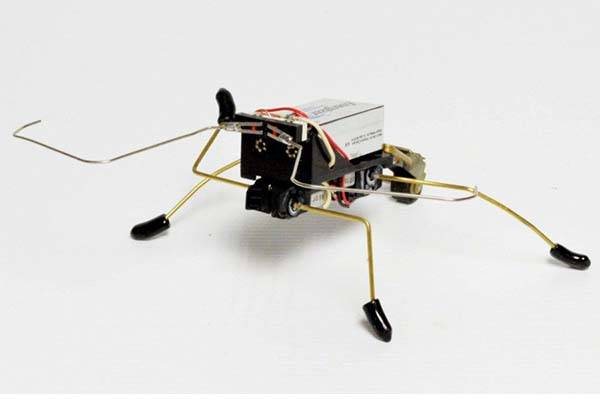 Make a Robotic Beetle with Elegant Steps by Yourself