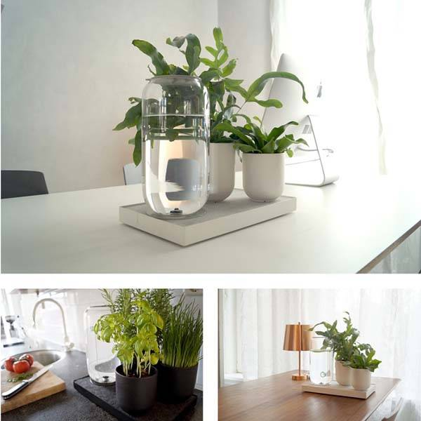 Tableau Automatic House Plant Watering Tray without Needing Electricity