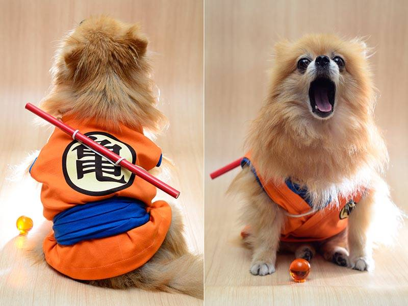 The Handmade Dragon Ball Dog Clothes, one of our handmade tech gifts