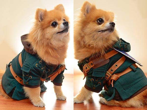 The Legend of Zelda Link Dog Costume