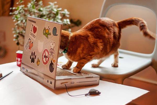 The Cat Scratch Laptop is a High Tech Cat Toy