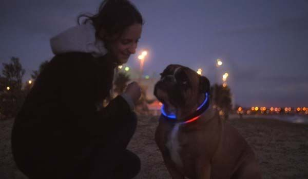 The Buddy Smart Dog Collar with Activity Tracker, GPS Locator and More