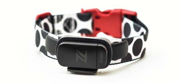 Nuzzle Smart Pet Collar without Extra Monthly or Annual Fees