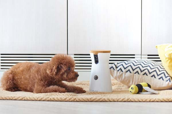 Furbo Interactive Dog Camera With Treat Dispenser Gadgetsin