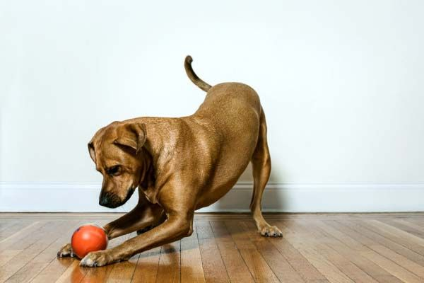 PlayDate App-Controlled Smart Pet Toy with HD Camera